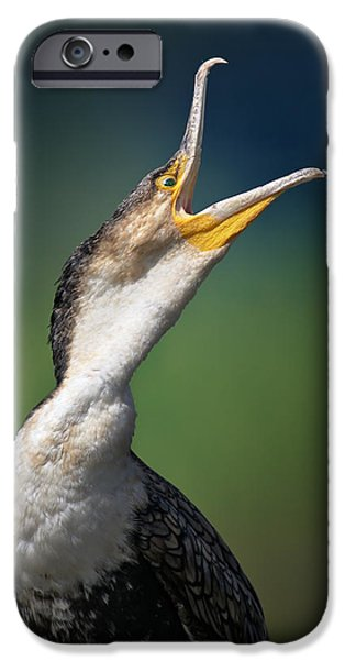Wild Animals Photographs iPhone Cases - Whitebreasted Cormorant iPhone Case by Johan Swanepoel