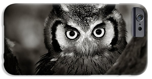 Intense iPhone Cases - Whitefaced Owl iPhone Case by Johan Swanepoel