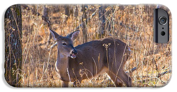 Forest iPhone Cases - Whitetail Doe Talking iPhone Case by Nikki Clark
