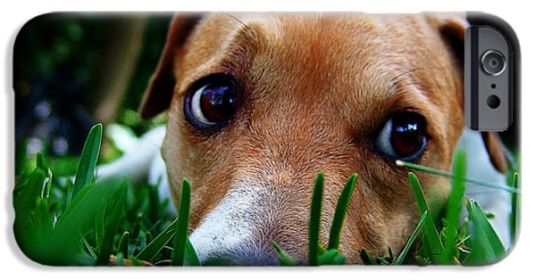 Puppies iPhone Cases - Who dug this hole in my garden? iPhone Case by Alessandro Della Pietra