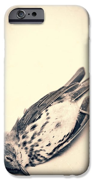 Animals Photographs iPhone Cases - Who killed Cock Robin iPhone Case by Edward Fielding