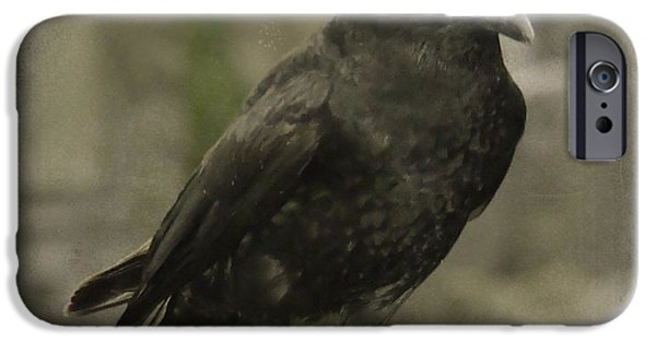 Crows iPhone Cases - Who Loves You Baby iPhone Case by Gothicolors Donna Snyder