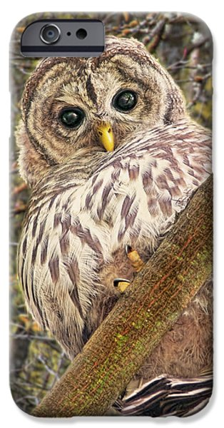 Baby Bird iPhone Cases - Who Who Are You Barred Owlet iPhone Case by Jennie Marie Schell