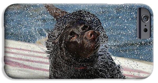 Chocolate Lab iPhone Cases - Whole Lot Of Shaking Going On 4 iPhone Case by Fraida Gutovich