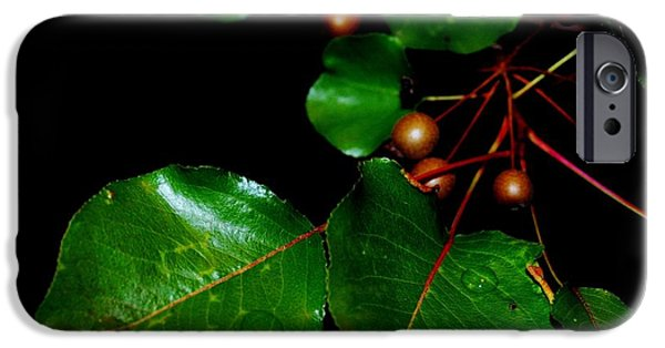 Berry iPhone Cases - Wholesome iPhone Case by Michelle McPhillips
