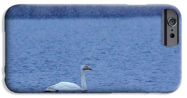 Morning iPhone Cases - Whooper swan and falling snow iPhone Case by Jouko Lehto