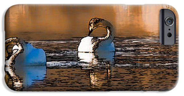 Paiting iPhone Cases - Whooper Swan  P by Leif Sohlman iPhone Case by Leif Sohlman