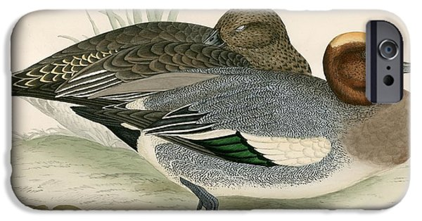 Hunting Bird iPhone Cases - Wigeon iPhone Case by Beverley R. Morris