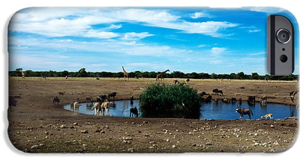 Fauna iPhone Cases - Wild Animals At A Waterhole, Etosha iPhone Case by Panoramic Images
