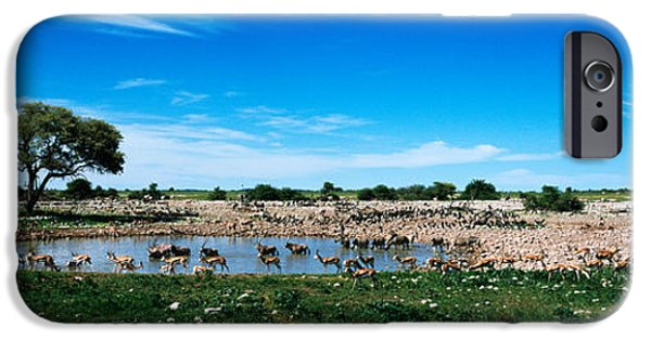 Fauna iPhone Cases - Wild Animals At A Waterhole, Okaukuejo iPhone Case by Panoramic Images