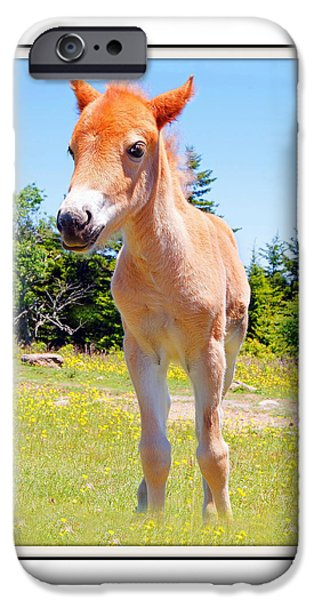 Young iPhone Cases - Wild Baby Horse iPhone Case by Constance Lowery