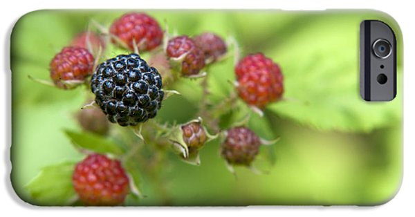 Black Berries iPhone Cases - Wild Berries iPhone Case by Christina Rollo