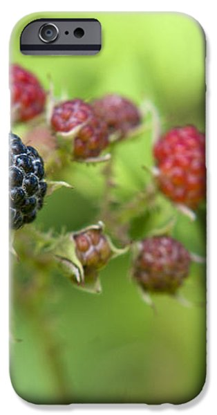 Wild Berries iPhone Case by Christina Rollo