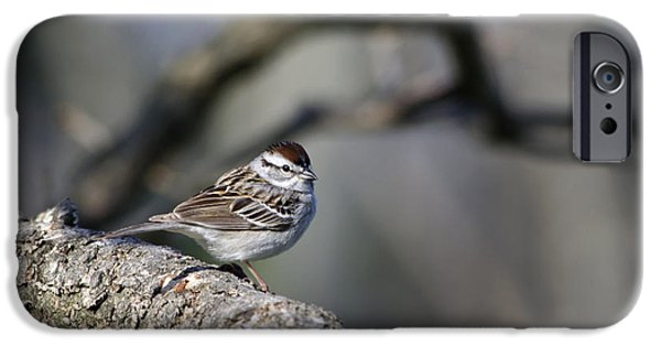 Sparrow iPhone Cases - Wild Bird - Chipping Sparrow iPhone Case by Christina Rollo