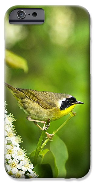 Warbler iPhone Cases - Wild Birds - Male Common Yellowthroat Warbler iPhone Case by Christina Rollo
