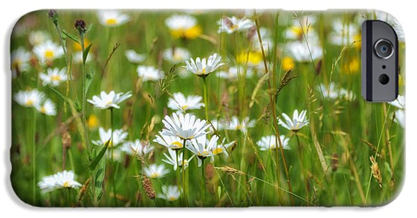 Fauna iPhone Cases - Wild Flower Meadow iPhone Case by Janet Burdon