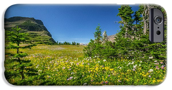 Abstracted Coneflowers iPhone Cases - Wild Flowers Glacier National PaintedPark   iPhone Case by Rich Franco