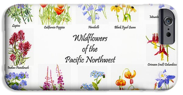 Columbine iPhone Cases - Wild Flowers of the Pacific Northwest Poster iPhone Case by Sharon Freeman