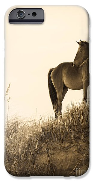 The Horse iPhone Cases - Wild Horse on the Beach iPhone Case by Diane Diederich