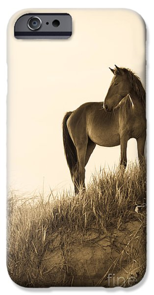 Wild Horse on the Beach iPhone Case by Diane Diederich