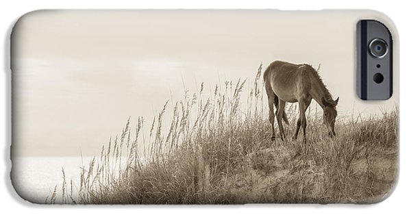 Wild Horse iPhone Cases - Wild Horse on the Outer Banks iPhone Case by Diane Diederich