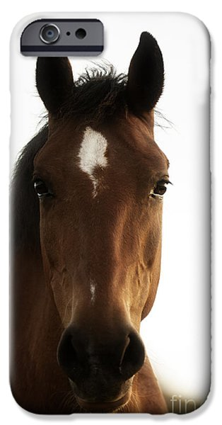 Animals Photographs iPhone Cases - Wild Horses-animals-image-14 iPhone Case by Wildlife Fine Art