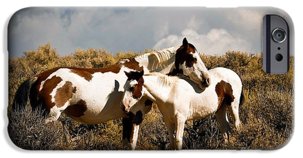 Animals Photographs iPhone Cases - Wild Horses Mother and Child iPhone Case by Steve McKinzie