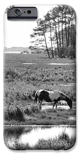 Wild horses of Assateague feeding iPhone Case by Dan Friend