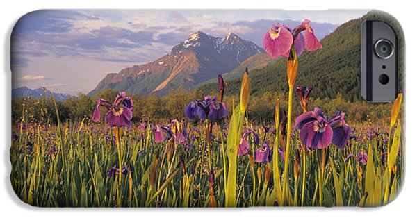 Matanuska iPhone Cases - Wild Iris Blooming In Front Of Pioneer iPhone Case by Jim Barr