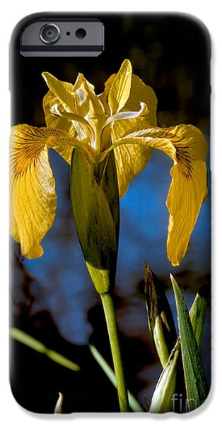 Haybale iPhone Cases - Wild Iris iPhone Case by Robert Bales