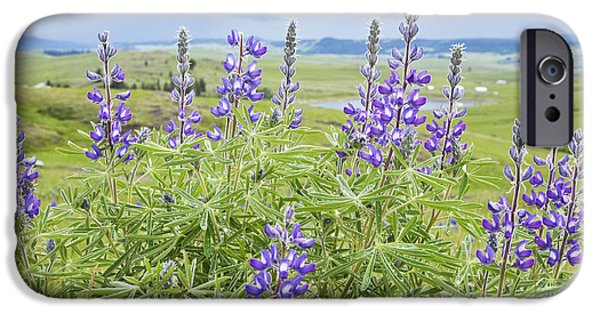 Field. Cloud iPhone Cases - Wild Lupine iPhone Case by Theresa Tahara