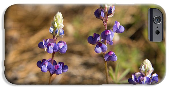 Annual iPhone Cases - Wild lupins iPhone Case by Jane Rix