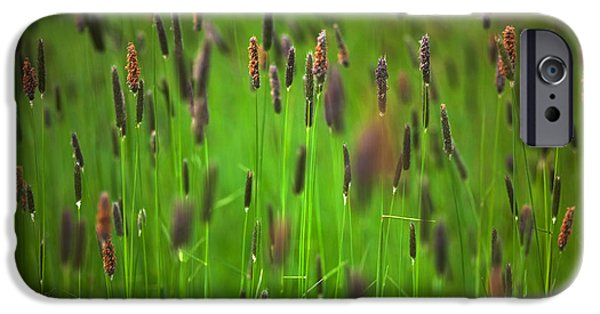 Meadow Photographs iPhone Cases - Wild Meadow Grass On Waterford Island iPhone Case by Panoramic Images