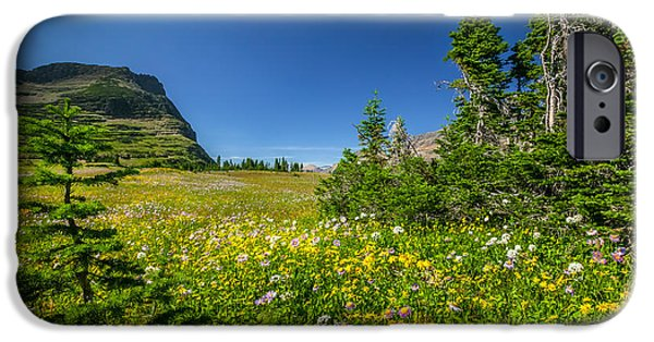 Abstracted Coneflowers iPhone Cases - Wild Mountain Flowers Glacier National Park   iPhone Case by Rich Franco