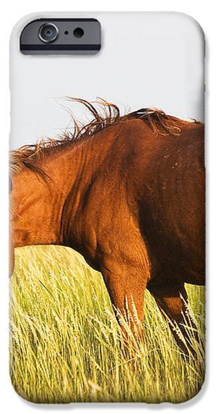 Wild Mustand on the Tidal Flats iPhone Case by Bob Decker