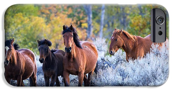 Mustang iPhone Cases - Wild Mustang Autumn iPhone Case by Mike Dawson