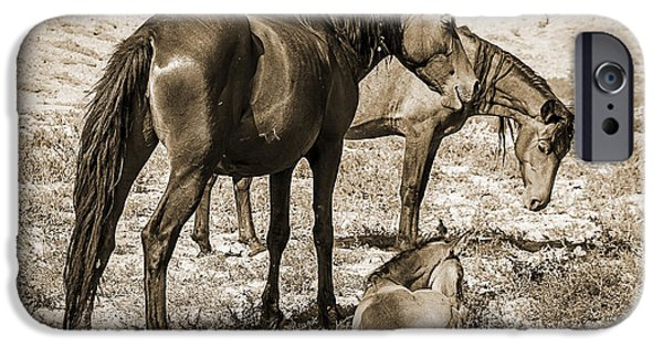 Nature Abstract iPhone Cases - Wild Mustangs of the West iPhone Case by Janice Rae Pariza