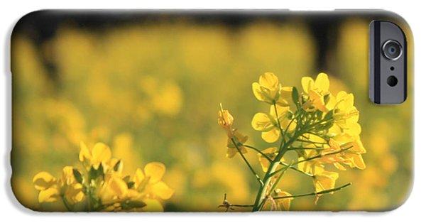 Vineyard In Napa iPhone Cases - Wild Mustard 3 iPhone Case by Penelope Moore
