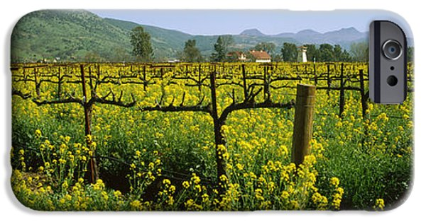 Winery Photography iPhone Cases - Wild Mustard In A Vineyard, Napa iPhone Case by Panoramic Images