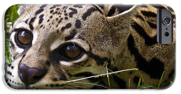 Zoologic iPhone Cases - Wild Ocelot iPhone Case by Heiko Koehrer-Wagner
