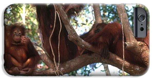 Orangutan iPhone Cases - Wild Orangutans iPhone Case by Art Wolfe