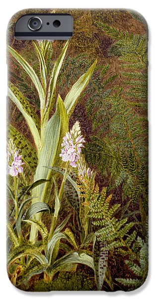 Flora Drawings iPhone Cases - Wild Orchids iPhone Case by Marian Emma Chase