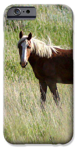 Wild Palomino iPhone Case by Sabrina L Ryan