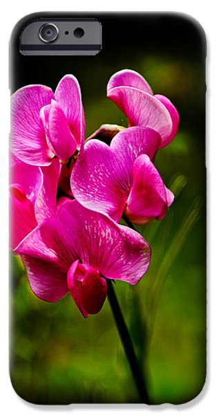 Haybale iPhone Cases - Wild Pea Flower iPhone Case by Robert Bales