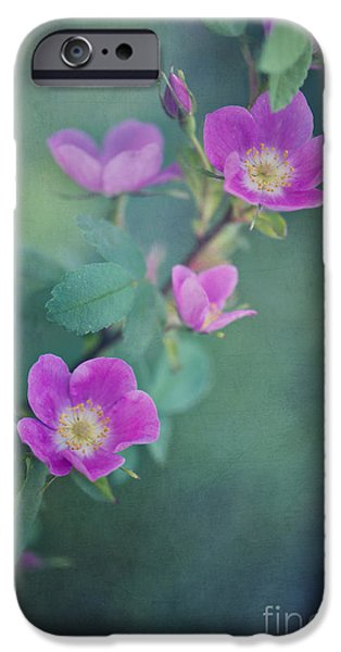 Flora iPhone Cases - Wild Roses iPhone Case by Priska Wettstein