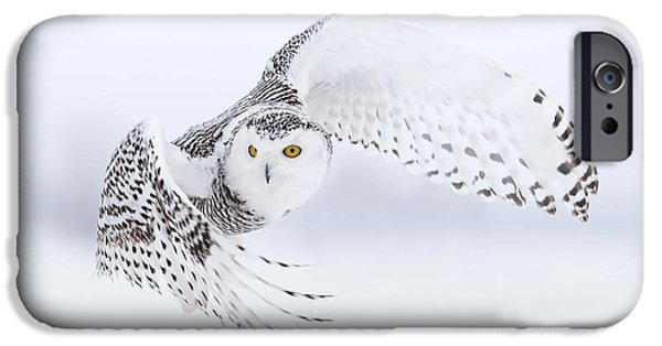 Recently Sold -  - Snowy iPhone Cases - Wild snowy owl iPhone Case by Miguel Lasa