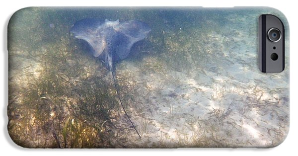 Fauna Pyrography iPhone Cases - Wild sting ray iPhone Case by Eti Reid