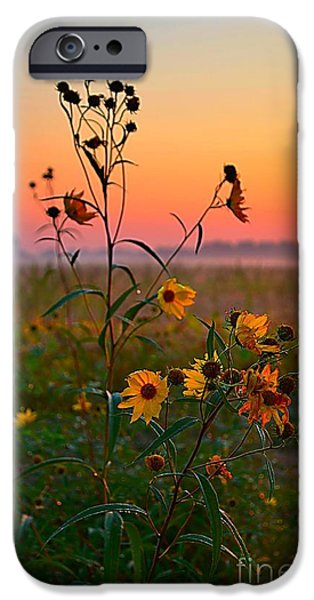Artography iPhone Cases - Wild Sunflowers at Dawn iPhone Case by Julie Dant