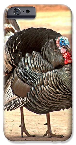 Wild Tom Turkey iPhone Case by Robert Bales