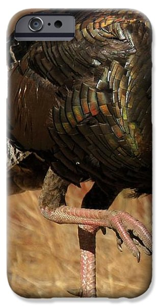 Wild Turkey iPhone Case by Adam Jewell